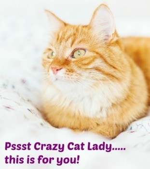 29 Trending Cat Products – Crazy Cat Lady Products!