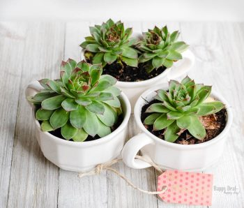 Succulent Tea Cups | Frugal Gift Idea